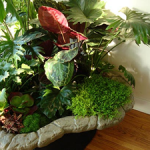 indoor plants - interior