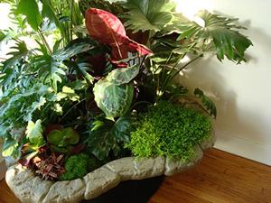 indoor plants - interior
