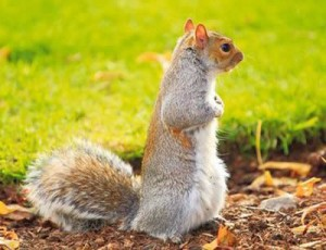 squirrel-invades-garden