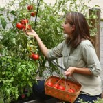 4 Easy tips for Organic Gardening