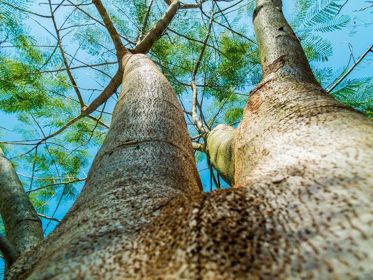 wonderful-tree