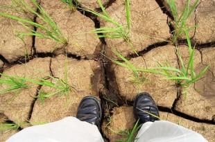 Drought Garden