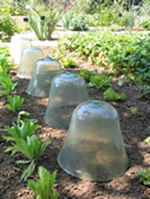 Soil pots or plastic bottles to the rescue