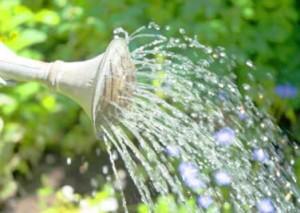 stop-wasting-water-garden